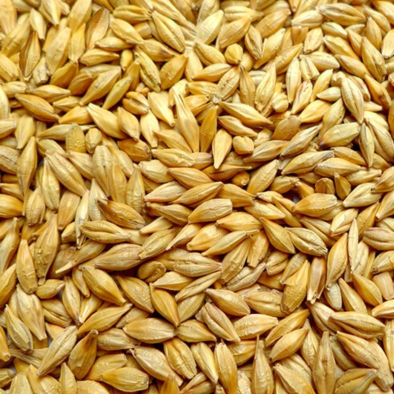 BREWING BARLEY
